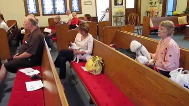 igreja-cachorros